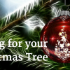 morriss-caring-for-christmas-tree-image-for-yoast-seo