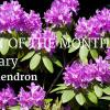 UGC Blog header Plant of The Month Feb