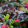 UGC Blog header Plant of The Month Month