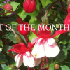 UGC Blog header Plant of The Month May