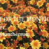 Blog header Plant of The Month October
