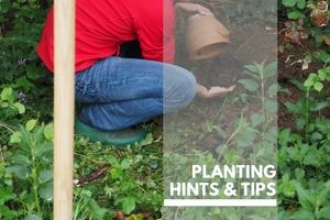 Planting hints and tips Plants Page