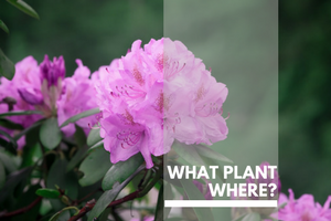 What Plant where Plants Page