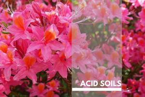 Acid Soils