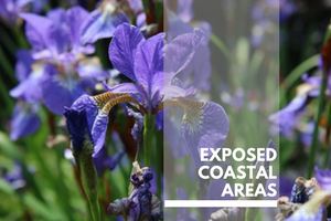 Exposed coastal areas