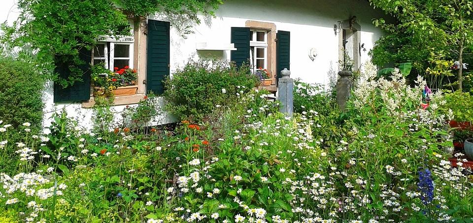 garden-302259_960_720 (2)