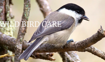 Wild Bird Care in Winter