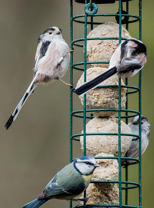 bird-feeder-1254464_960_720