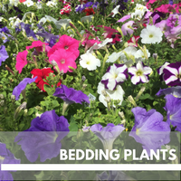 Bedding Plants Block Plants page