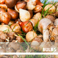 Bulbs Block Plants page