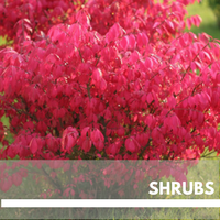 shrubs Block Plants page