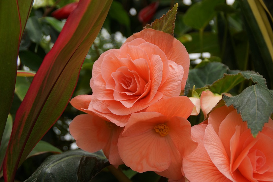 flower-3375681_960_720