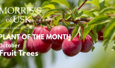 Plant of the month October- Fruit Trees