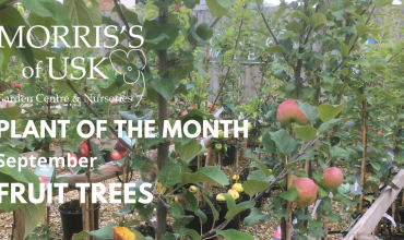 Plant of the month September – Fruit Trees