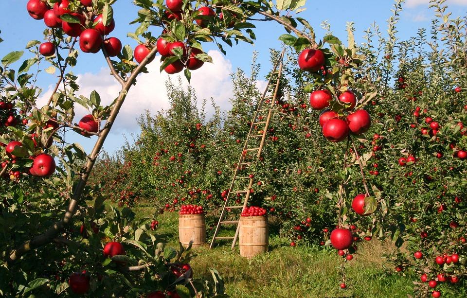 apple-1873078_960_720